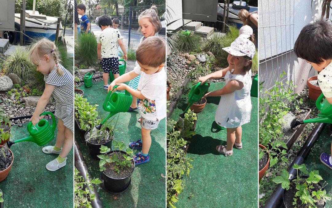 Dbamy o nasze owoce i warzywa!
